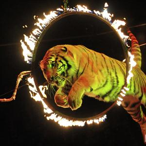 Цирки Красноуральска