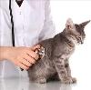 Ветеринарные клиники в Красноуральске